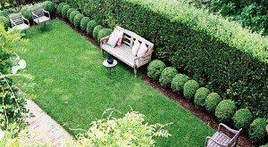 живая изгородь на даче своими руками какие растения