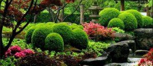 сад в японском стиле фото 12