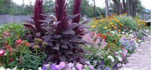 миксбордер своими руками схема фото подбор растений