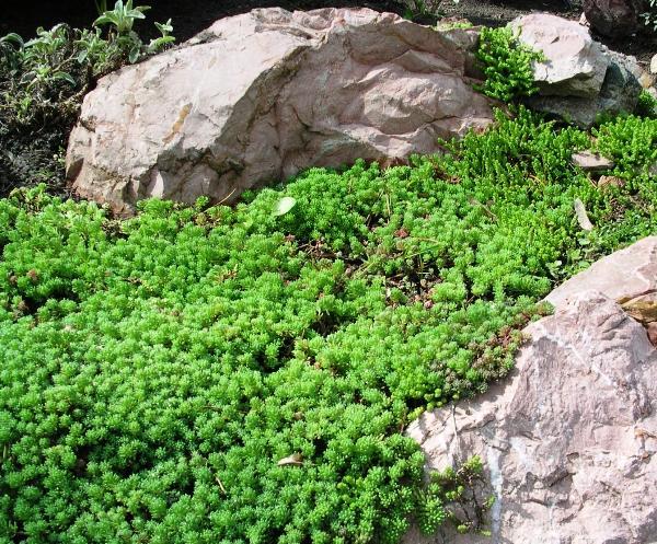 декоративные травы для сада фото 2