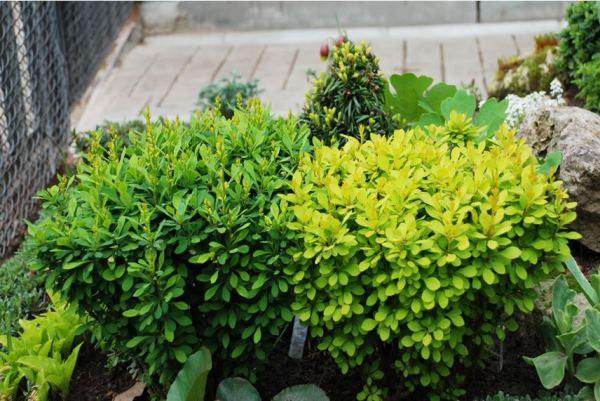 цветы в палисаднике фото 12