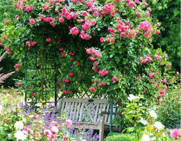 цветы в палисаднике фото 8