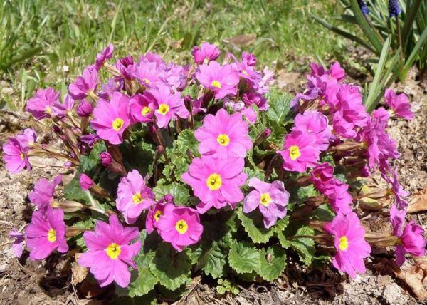 цветы в палисаднике фото 9