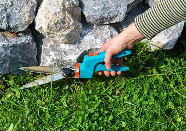 газонная трава фото 10