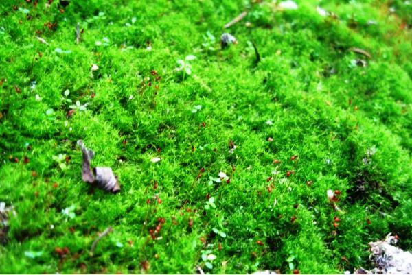 газонная трава фото 2