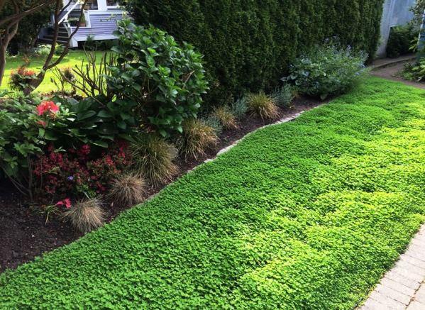 газонная трава фото 6