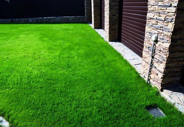 газонная трава фото 8