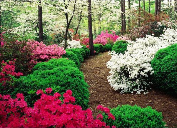 многолетние цветущие кустарники фото 19