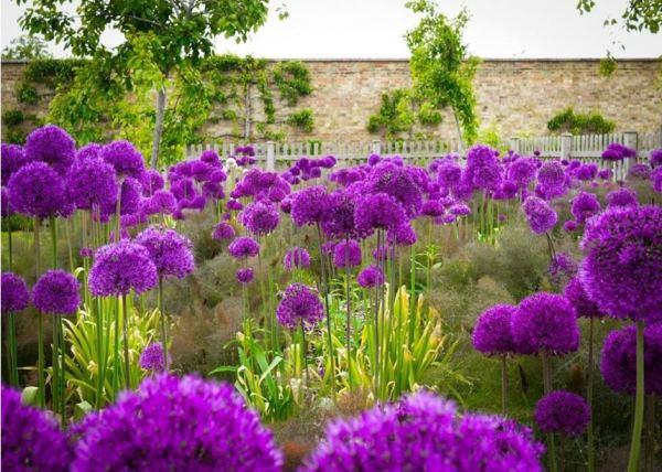 многолетние цветы для урала и сибири фото 12