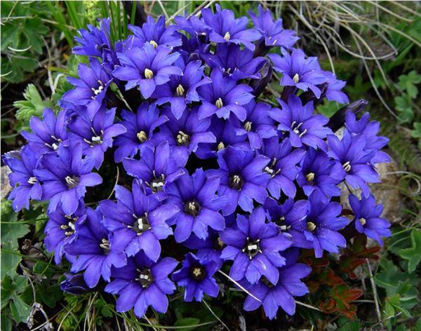 многолетние цветы для урала и сибири фото 5