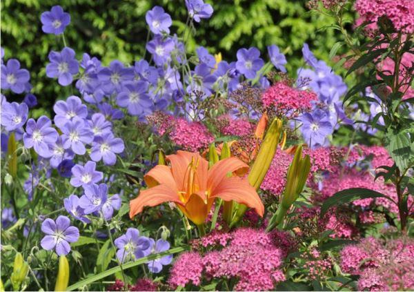 многолетние цветы для урала и сибири фото