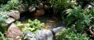 пруд на даче фото 31