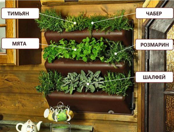 вертикальное озеленение фото 10