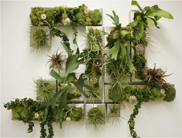 вертикальное озеленение фото 5